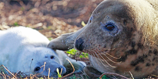 Studying behavioural differences in seals
