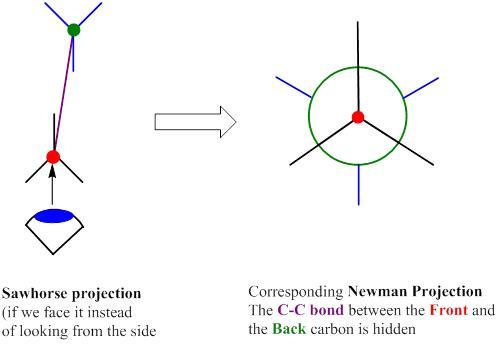 Newman projection pdf
