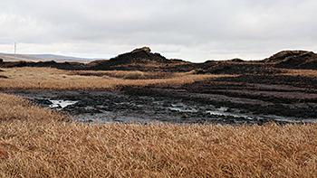 Moss Flats