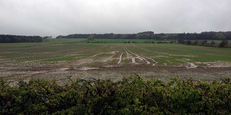Image 3: Heavy rainfall event causing soil erosion and runoff via tramlines.