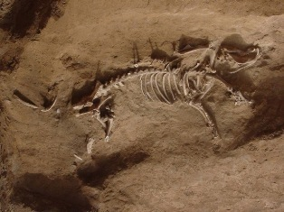Remains of a 4,000-year-old Chinese pig
