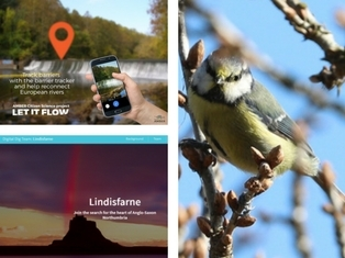blue tit, smartphone next to river, outline of Lindisfarne island