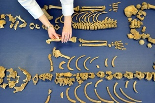 Skeleton bones laid out on a blue cloth