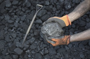 miner's hands holding a lump of coal