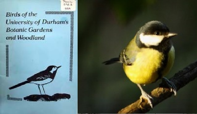 Cover the bird guide, alongside a blue tit
