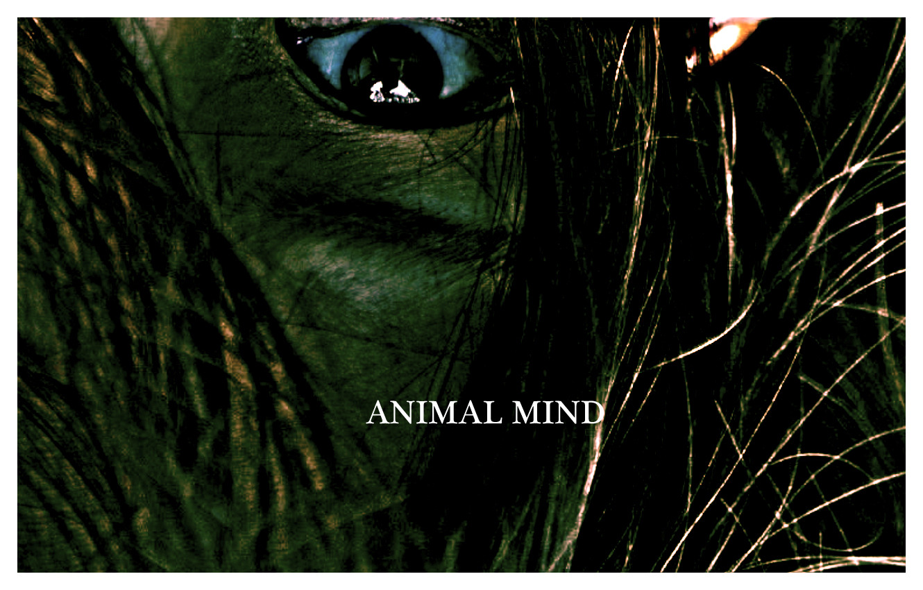 animal mind The mind of an animal is a far richer, more complex thing than most people know — as a new time book reveals.